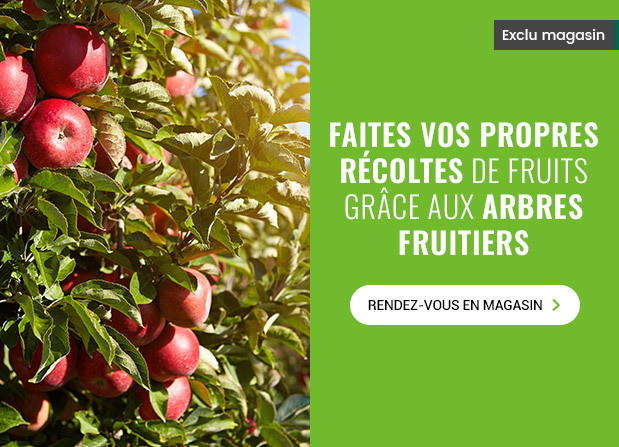 PROMO ARBRES FRUITIERS : PROLONGATION !
