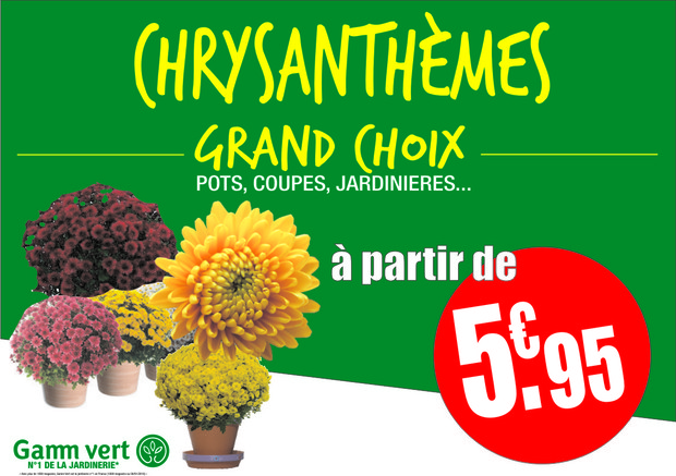 ARRIVAGE CHRYSANTHEMES