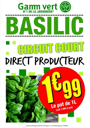 BASILIC DIRECT PRODUCTEUR